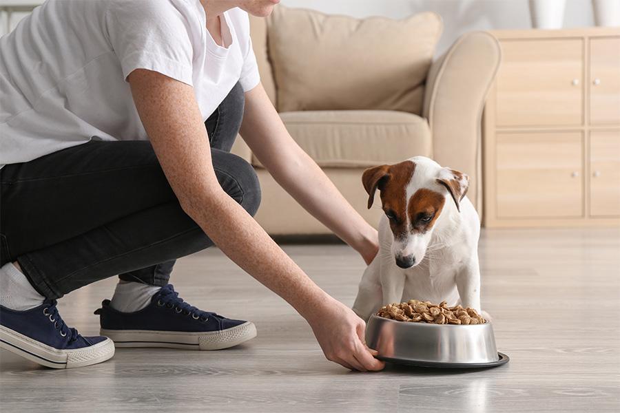 4 Conseils pour l'alimentation de votre chien