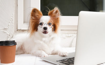 Assurance pour animaux : a quoi ça sert?