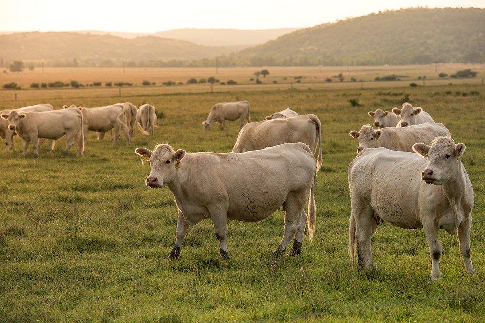 Devenir vétérinaire à la campagne : soigner les animaux de la ferme