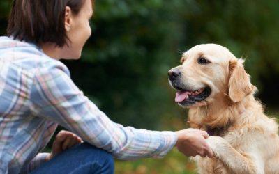 Eduquer un chien adulte : les essentiels à savoir